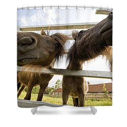 North Yorkshire, England Horses Looking Shower Curtain by John Short