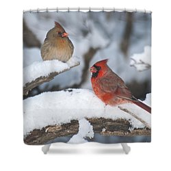 Northern Cardinal Pair 4284 2 Shower Curtain by Michael Peychich