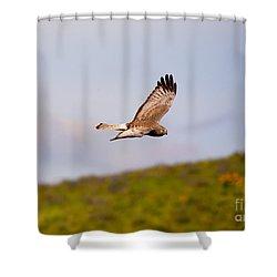 Northern Harrier Flight Shower Curtain by Mike  Dawson