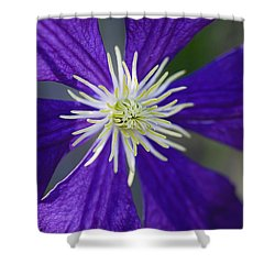 Not Shy Shower Curtain by Rich Franco