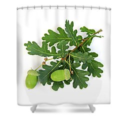 Oak Branch With Acorns Shower Curtain by Elena Elisseeva