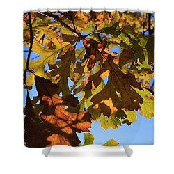 Oak Leaves With Backlighting Shower Curtain by Lyle Hatch