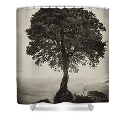 Shower Curtain featuring the photograph Oak Tree by Hugh Smith