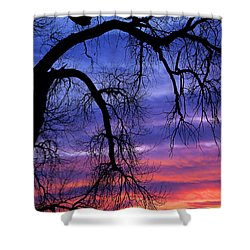 Shower Curtain featuring the photograph Obeisance by Jim Garrison
