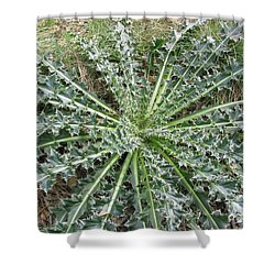 October Thistle Shower Curtain by Mark Robbins