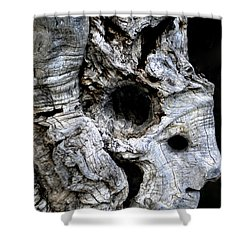 Old Ancient Olive Tree Spain Shower Curtain by Colette V Hera  Guggenheim