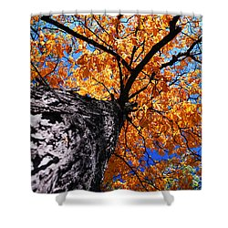 Old Elm Tree In The Fall Shower Curtain by Elena Elisseeva