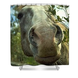 Old Gray Mare Shower Curtain by Patricia Greer