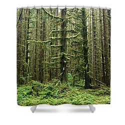 Old Growth Forest In The Hoh Rain Shower Curtain by Natural Selection Craig Tuttle