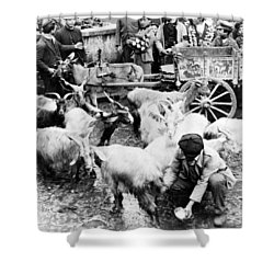 Old Palermo Sicily - Goats Being Milked At A Market Shower Curtain by International  Images