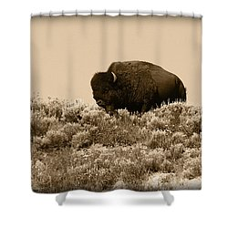 Old Timer Shower Curtain by Shane Bechler
