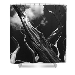 Shower Curtain featuring the photograph Old Tree by David Gleeson