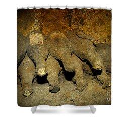 Old Wine Rarities Shower Curtain by Heiko Koehrer-Wagner