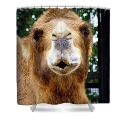 Omar The Camel Shower Curtain by Lainie Wrightson