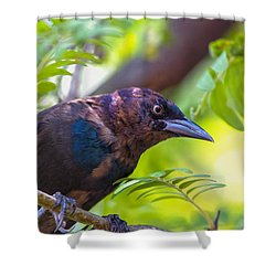 Ominous Molting Grackle Shower Curtain by Bill Tiepelman
