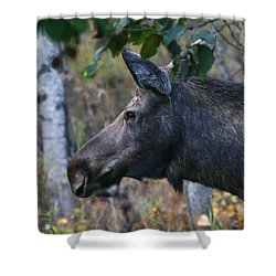 Shower Curtain featuring the photograph On Alert by Doug Lloyd