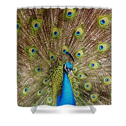 On Display Shower Curtain by Sandi OReilly
