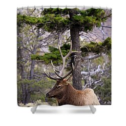 On The Grass Shower Curtain by Steve McKinzie