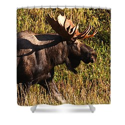 Shower Curtain featuring the photograph On The Move by Doug Lloyd