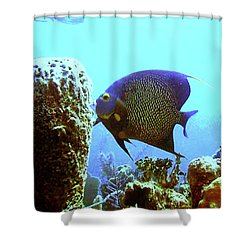 On The Reef Shower Curtain by Barry Jones