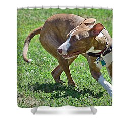 On The Run Shower Curtain by Lisa Phillips