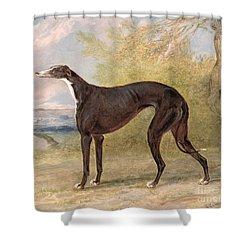 One Of George Lane Fox's Winning  Shower Curtain by George Garrard