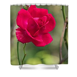 Shower Curtain featuring the photograph One Rose by Joseph Yarbrough
