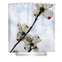 Shower Curtain featuring the photograph Only Once A Year by Barbara McMahon