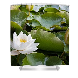 Open And Closed Water Lily Shower Curtain by Semmick Photo