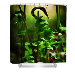 Opening And Upward Shower Curtain