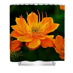 Orange And Yellow Shower Curtain by Eric Tressler
