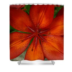 Orange Beauty Shower Curtain by Dolores  Deal