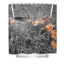 Orange Day Lilies. Shower Curtain by Ausra Huntington nee Paulauskaite