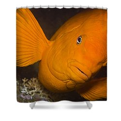 Orange Garibaldi Shower Curtain by Mike Raabe