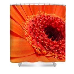 Orange Gerbera Close Up Shower Curtain