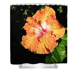 Orange Hibiscus After The Rain 1 Shower Curtain by Connie Fox