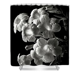 Orange Jubilee In Black And White Shower Curtain