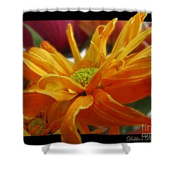 Shower Curtain featuring the photograph Orange Juice Daisy by Debbie Portwood