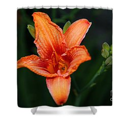 Shower Curtain featuring the photograph Orange Lily by Davandra Cribbie