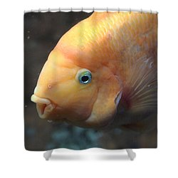 Shower Curtain featuring the photograph Orange by Milena Boeva