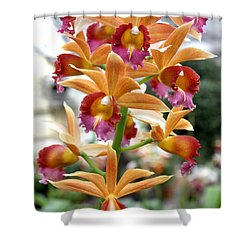 Shower Curtain featuring the photograph Orange Orchids by Debbie Hart