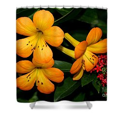 Orange Rhododendron Flowers Shower Curtain by Sabrina L Ryan