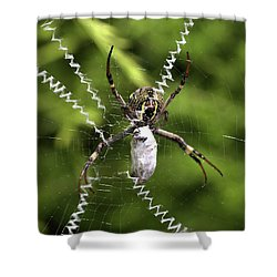 Shower Curtain featuring the photograph Orb Weaver by Joy Watson