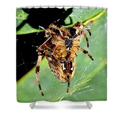 Orb Weaver Waits Shower Curtain