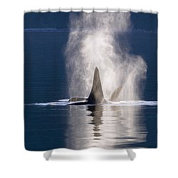 Orca Pair Spouting Southeast Alaska Shower Curtain by Flip Nicklin