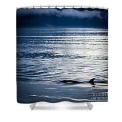 Orca Surfacing Shower Curtain by Darcy Michaelchuk