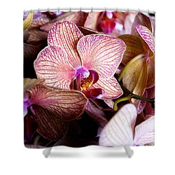 Orchid IIi Shower Curtain by Christopher Holmes