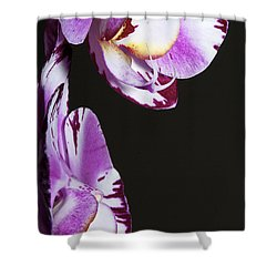 Orchid Stem Shower Curtain by Phyllis Denton
