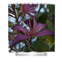 Orchid Tree Shower Curtain by Joseph Yarbrough