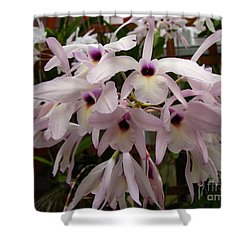Shower Curtain featuring the photograph Orchids Beauty by Donna Brown